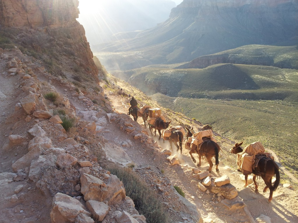 Mule train on S. Kaibab Trail.  I want to be a mule skinner at the Grand Canyon in my next life.